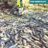 1998 Hungerford Fish Mortality